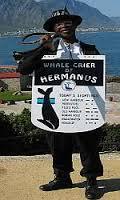 A Whale Crier