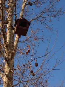 Nest'kennel'