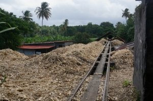 Sugar Cane Waste