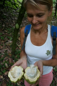 Opening the Cocoa Bean pod