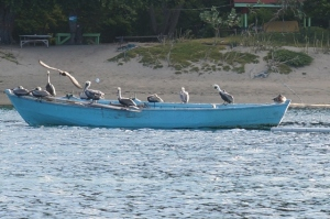 Pelicans Liming!